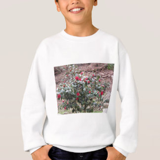 Ancient cultivar of Camellia japonica flower Sweatshirt