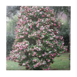 Ancient cultivar of Camellia japonica flower Tile