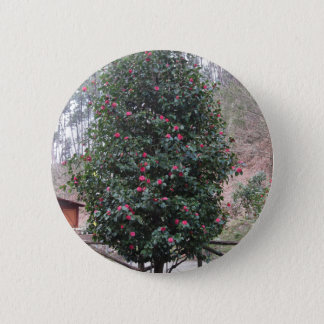 Ancient japanese cultivar of Camellia japonica 6 Cm Round Badge