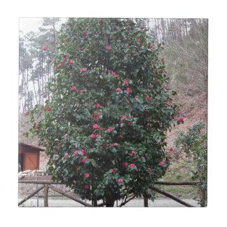 Ancient japanese cultivar of Camellia japonica Ceramic Tile