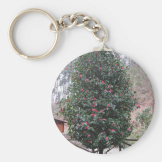 Ancient japanese cultivar of Camellia japonica Key Ring