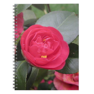 Ancient japanese cultivar of red Camellia japonica Notebook