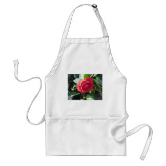 Ancient japanese cultivar of red Camellia japonica Standard Apron