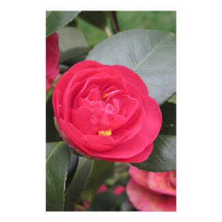 Ancient japanese cultivar of red Camellia japonica Stationery