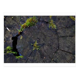 Ancient Nature.JPG Postcard