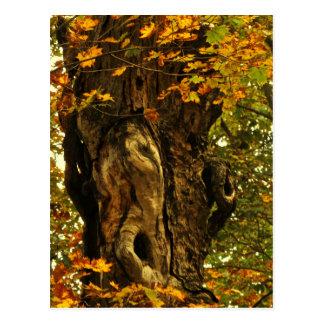 Ancient Tree Postcard