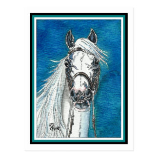 Andalusian Horse Art Postcard