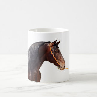 andalusian stallion at white coffee mug