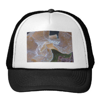 anemone 2 hats