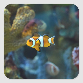 Anemone Fish Square Sticker