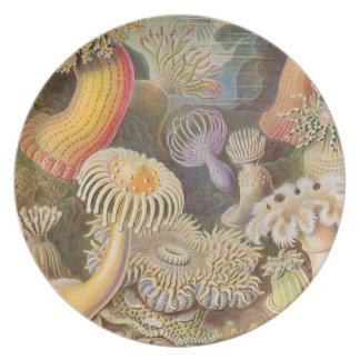 Anemone Garden Plate
