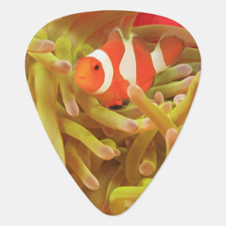 anemonefish on giant indo pacific sea anemone, guitar pick