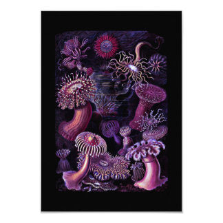 Anemones in Dark Purple Card