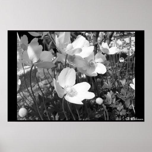 Anemones Posters