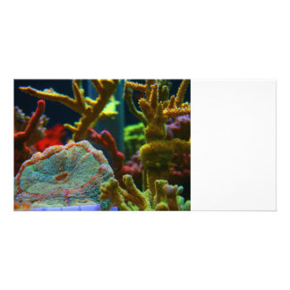 anenome saltwater image coral aquarium tank photo card template