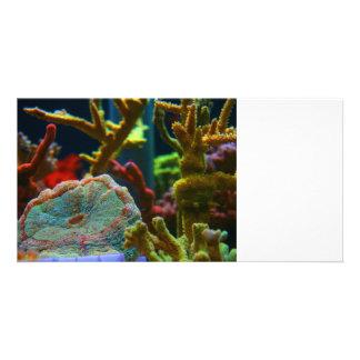 anenome saltwater image coral aquarium tank photo card template