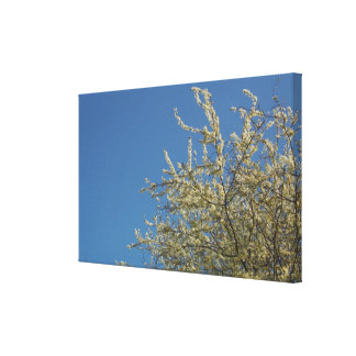 Angel Blossom Canvas Print