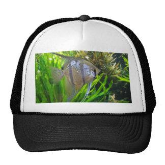 Angel Fish Trucker Hats