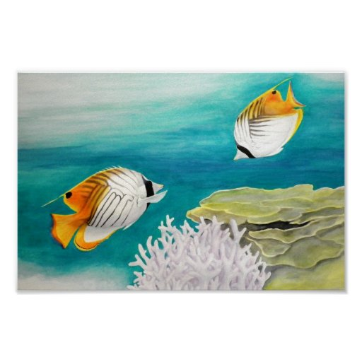 Angel fish posters