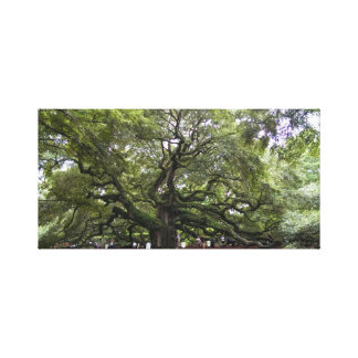 Angel Oak is 400 year old tree canvas print
