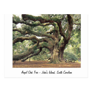 Angel Oak Tree near Charleston, SC Postcard