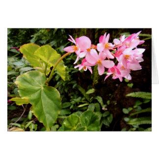 Angel wing Begonia Card