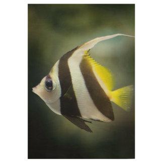 Angelfish Wood Poster