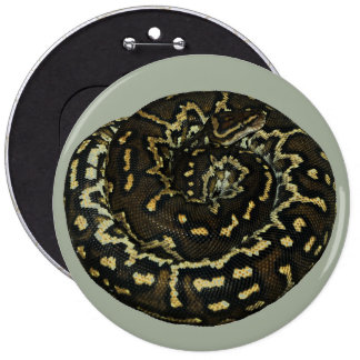 Angolan python for exotic pet lovers 6 cm round badge