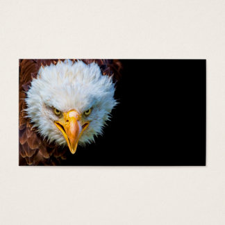 Angry american bald eagle business card