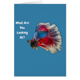 Angry Betta Fighting Fish What Are You Looking At? Card