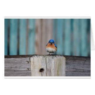 Angry Bluebird Card