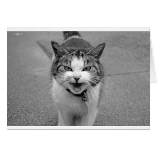 Angry Cat Greeting Cards