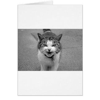 Angry Cat Cards
