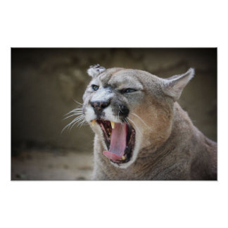 Angry Cougar Poster