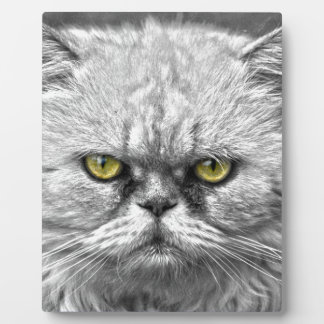 Angry Golden Cat Eyes Display Plaques