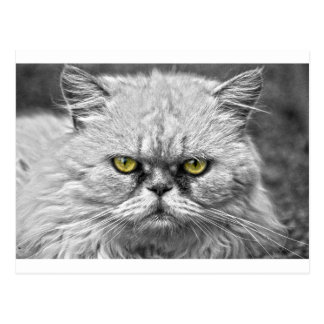 Angry Golden Cat Eyes Postcard