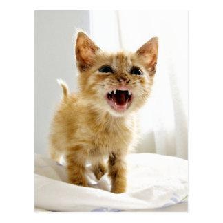 Angry Kitten Postcard