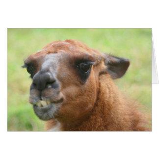 Angry Llama Face Farm Animal Card