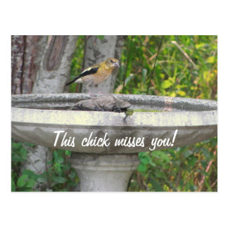 Angry Looking Bird with your phrase Postcard