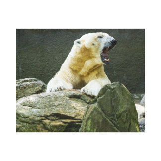 Angry Polar Bear Stretched Canvas Prints