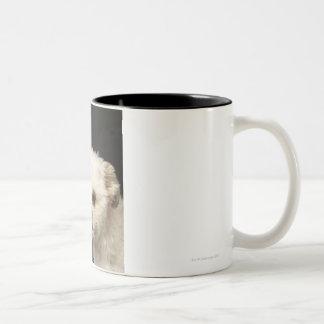 Angry white Shih Tzu with brown eyes Coffee Mug