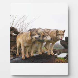 Angry Wolf Pack Plaque