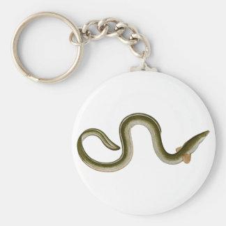 Anguilla anguilla key ring