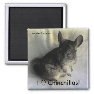 Angus Chinchilla Magnet