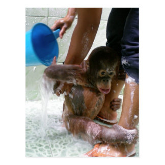 Animal Baby Bath Day Postcard