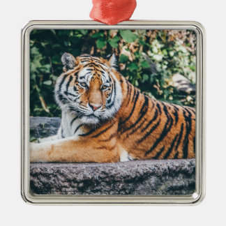 Animal Big Cat Safari Tiger Wild Cat Wildlife Zoo Metal Ornament