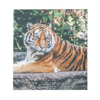 Animal Big Cat Safari Tiger Wild Cat Wildlife Zoo Notepad