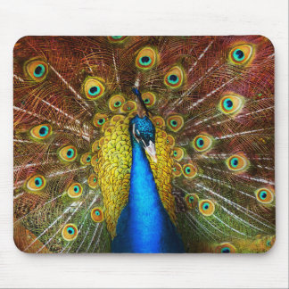Animal - Bird - Peacock proud Mouse Pad