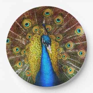 Animal - Bird - Peacock proud Paper Plate