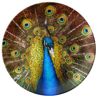 Animal - Bird - Peacock proud Plate